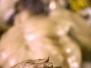 Carteleria 2011